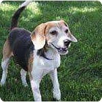 Adopt A Pet :: Dolly Mae - Phoenix, AZ