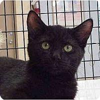 Adopt A Pet :: Daniel - Deerfield Beach, FL