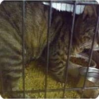 Adopt A Pet :: Spike - Fort Lauderdale, FL