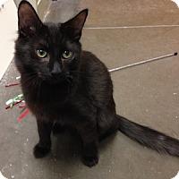 Adopt A Pet :: Wynken - Gilbert, AZ