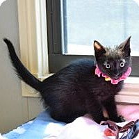 Adopt A Pet :: Moon - Colorado Springs, CO
