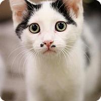 Adopt A Pet :: Gatsby - Sacramento, CA