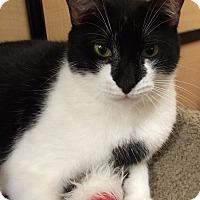 Adopt A Pet :: Maggie - Monroe, GA