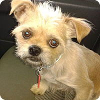 Adopt A Pet :: Muggsy - Arlington, TN