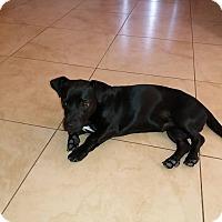 Adopt A Pet :: Metzi - Holmes Beach, FL