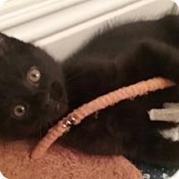 Adopt A Pet :: Quincy - North Highlands, CA