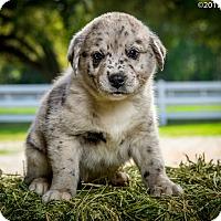 Adopt A Pet :: Huck - Folsom, LA