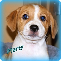 Adopt A Pet :: Marty~adopted! - Glastonbury, CT