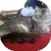 Adopt A Pet :: Matisse - Vancouver, BC