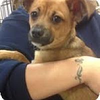 Adopt A Pet :: Jay Jay - Modesto, CA
