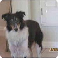 Adopt A Pet :: Star - apache junction, AZ