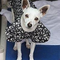 Adopt A Pet :: Cami - Chino, CA