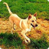 Adopt A Pet :: Butter (fostered in TX) - Cranston, RI