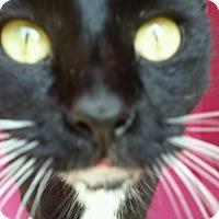 Adopt A Pet :: FIONA - Ocala, FL