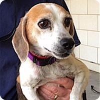 Adopt A Pet :: Maxie - Houston, TX