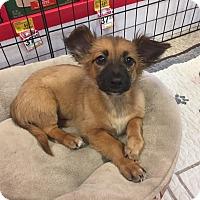 Adopt A Pet :: Annie - Brea, CA