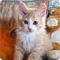 Adopt A Pet :: Prince Valiant - Davis, CA
