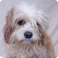 Adopt A Pet :: Sparky - Oxford, MS