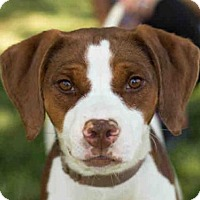 Adopt A Pet :: LUCY - Maumee, OH