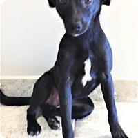 Adopt A Pet :: Duncan - Channahon, IL