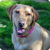 Adopt A Pet :: Willow - Clovis, CA