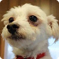 Adopt A Pet :: BANDIT - Wainscott, NY