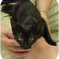 Adopt A Pet :: Coffee - Garland, TX