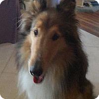 Adopt A Pet :: Lady - Gardena, CA