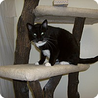 Adopt A Pet :: Miss Lillith - Milwaukee, WI
