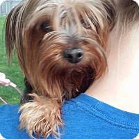 Adopt A Pet :: Addison - Lorain, OH