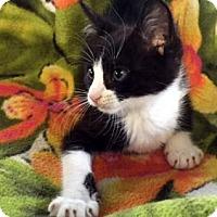 Adopt A Pet :: Bootsie - Porter, TX