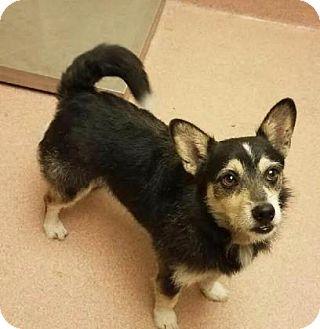 Terrier (Unknown Type, Medium) Mix Dog for adoption in Columbus, Georgia - Percy 3411