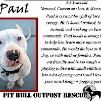 Adopt A Pet :: Paul - Lafayette, OR