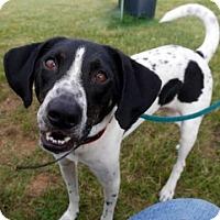 Adopt A Pet :: UNCLE LEO - Albany, NY