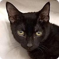 Adopt A Pet :: Andrew - New York, NY
