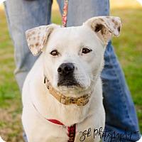 Adopt A Pet :: Pink - Greenwood, SC