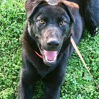Adopt A Pet :: Joker - Huntsville, AL