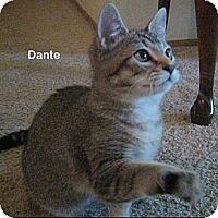 Adopt A Pet :: Dante - Portland, OR