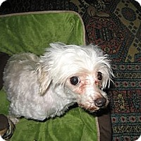 Adopt A Pet :: Brittany - South Amboy, NJ