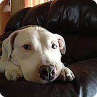 Adopt A Pet :: Powder - Houston, TX