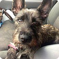 Adopt A Pet :: Millie - Oceanside, CA