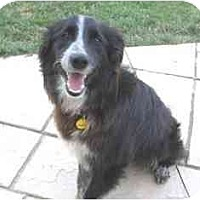Adopt A Pet :: Buffer--ADOPTED!! - Tiffin, OH