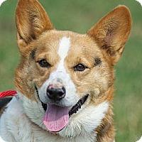 Adopt A Pet :: Mikey - Providence, RI