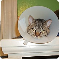 Adopt A Pet :: Leon - Indianapolis, IN