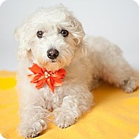 Adopt A Pet :: Ava - Los Angeles, CA
