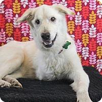 Adopt A Pet :: Cora - Starkville, MS