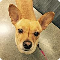Adopt A Pet :: Jenna Sue - Woodland, CA
