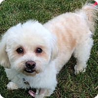 Adopt A Pet :: Chippy - Washington, PA
