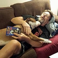 Labrador Retriever/American Staffordshire Terrier Mix Dog for adoption in Woodland, California - Fostering