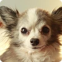 Adopt A Pet :: Nemo - Romeoville, IL